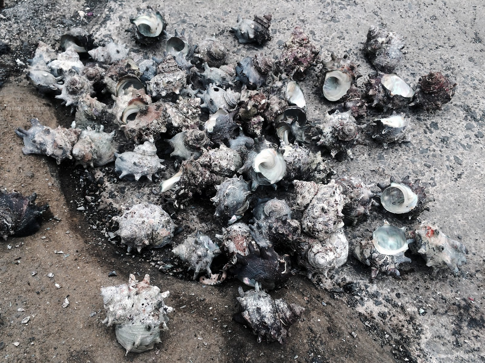 South Korea, Jeju Island, Yonsei University, YISS 2014, Sunrise Peak conch shells