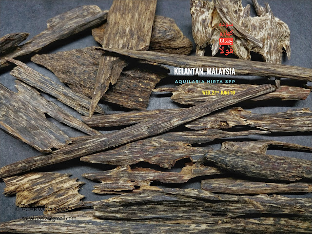 Rare species of Agarwood from Malaysia. Beautiful sweet woody is the bonus for this type of quality.