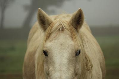 Wallpaper kuda poni keren