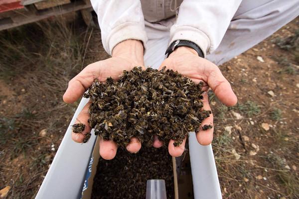 Σαν σήμερα το Χειμώνα του 2017: Οι μελισσοκόμοι μέτραγαν απώλειες άνω του 50%.. Φοβερές καταστροφές λόγω του χιονιά