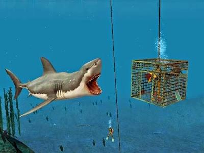 Tiburón - KindleGarten