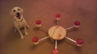 bedbug dog atlanta, bed bug dog savannah, bed bug dog hilton head,