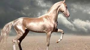 ♣ Arti mimpi melihat kuda dalam togel