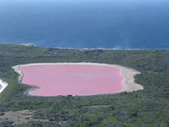 लेक हिलियर का पानी गुलाबी रंग का क्यों है?
