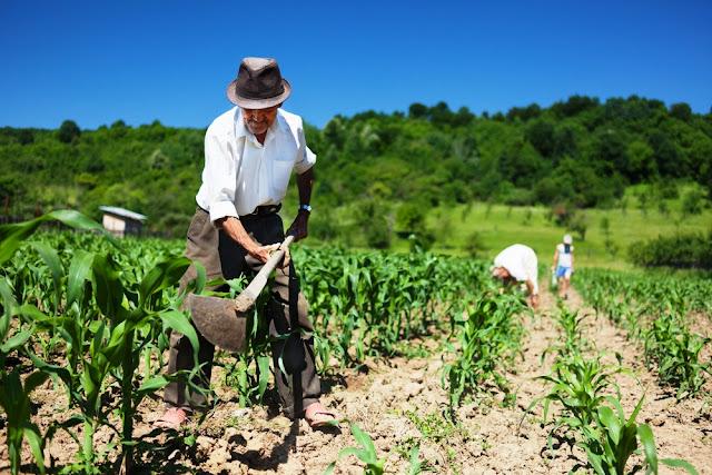 Agricultura familiar ajuda no combate à fome e ainda gera 77% dos empregos no setor agrícola.