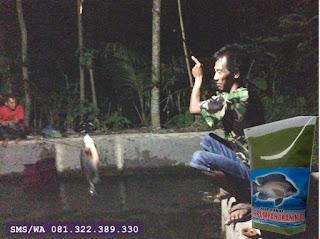 Umpan Ikan Nila Khusus Malam Hari