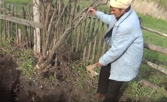 В Сибири мужчина сажал картошку — а нашел кости бывшего мужа своей жены!