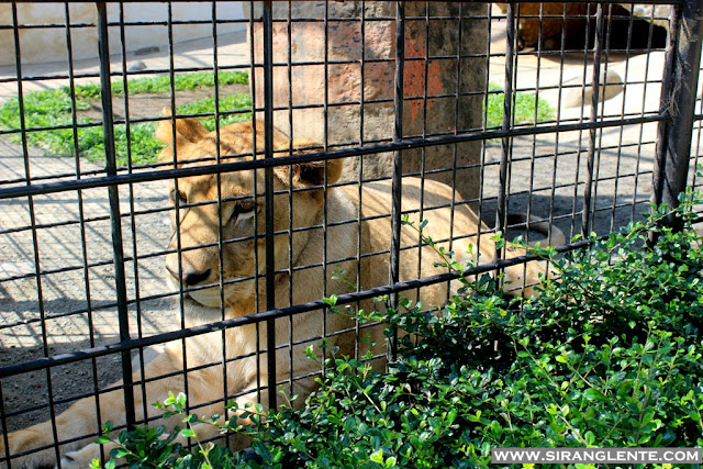 Kaamulan Zoo Bukidnon