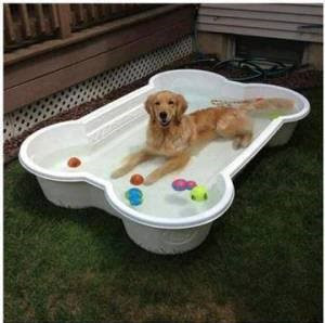Top 3 Ways To Keep Your Dogs Cool This Summer