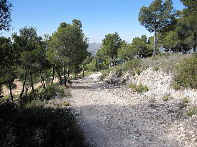 Camí de la Font del Llop. Carrascar de l'Arguenya