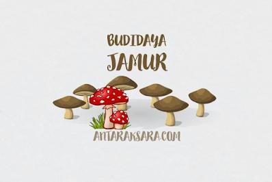 Cara Budiaya Jamur Tiram atau Jamur Merang