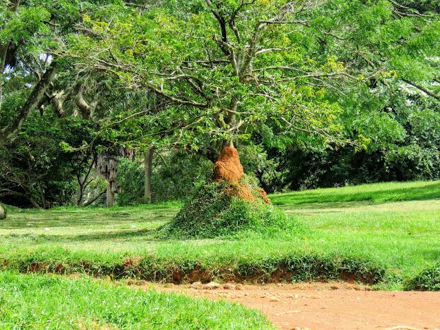 Things to do in Entebbe: Explore Flora in Entebbe Botanical Gardens