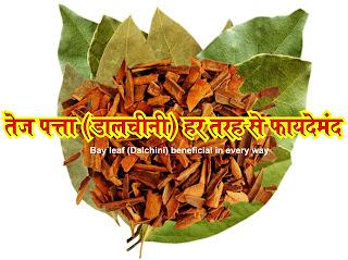 tej patta (dalchini) har tarah se faydemand in hindi,tej patta in hindi, tej patta chhal in hindi, tej patta tree in hindi, tej patta tree images image, tej patta tree photo, tej patta tree jpeg, tej patta tree images jpg, tej patta benefits in hindi, तेज पत्ता एक आयुर्वेदिक जड़ी बूटी है in hindi,  इसकी पत्तियों और तेल का उपयोग दवा बनाने के लिए किया जाता है in hindi, कैंसर और गैस के इलाज के लिए तेज पत्ते का उपयोग किया जाता है in hindi, यह पित्त प्रवाह को उत्तेजित करता है जोin hindi,  पसीने का कारण बनता हैin hindi, तेजपात मसाले के रुप में अति प्रचलित हैin hindi, दालचीनी के रुप में इसकी छाल तथा सूखी पत्तियां गरम मसाले में प्रयोग होती हैin hindi, यह एक तरह का गर्म मसाला हैin hindi, जिसका उपयोग खाने में खुशबू तथा स्वाद बढ़ाने के लिए किया जाता हैin hindi, तेज पत्ते में काफी मात्रा में कॉपर in hindi,, पौटेशियम in hindi,, कैल्शियम, मैग्नीशियम in hindi,, सेलेनियम और आयरन पाया जाता है in hindi, जो हमारे शरीर के लिए बहुत ही फायदेमंद होते हैंin hindi, अपच, गले के रोग तथा कफ निस्सारक औषधियों का यह मुख्य अवयव है in hindi, तेज पत्ता एक ऐसी आयुर्वेदिक जड़ी बूटी है in hindi, और इसमें शरीर के कई रोगों का उपचार है in hindi, सदियों से तेज पत्ता को राजा-महाराजाओं के मुकुट के अंदर लगाया जाता था in hindi, ताकि वे तनाव से दूर रहें in hindi, और तेज पत्ता में मौजूद एंटी इंफ्लेमेटरी गुण के कारण उनके सिर में होने वाली समस्या भी दूर होती थी in hindi, इसकी पत्तियों और तेल का उपयोग गैस कम करने in hindi, और जोड़ों का दर्द कम करने के लिए किया जाता हैin hindi, तेज पत्ता में कई तरह के प्रमुख लवण जैसे कॉपर in hindi,, पोटैशियम, कैल्शियम, सेलेनियम और आयरन पाए जाते हैं in hindi, जो शरीर के लिए बहुत ही फायदेमंद होते हैंin hindi, खाने में इसका इस्तेमाल इसलिए भी किया जाता है in hindi, क्योंकि इससे पाचन संबंधी बीमारियां दूर होती हैं in hindi, जो लोग चाय में तेज पत्ता डालते हैं in hindi, उन्हें कब्ज, एसिडिटी और मरोड़ जैसी समस्याएं नहीं होती in hindi, तेज पत्ता खाने से शरीर में रक्त का संतुलन बना रहता है in hindi, जिससे मधुमेह की समस्या नहीं होती in hindi, तेज पत्ते में एंटीऑक्सिडेंट गुण होते हैं in hindi, जो