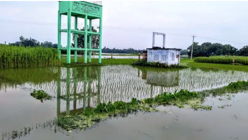 Land crops submerged in water