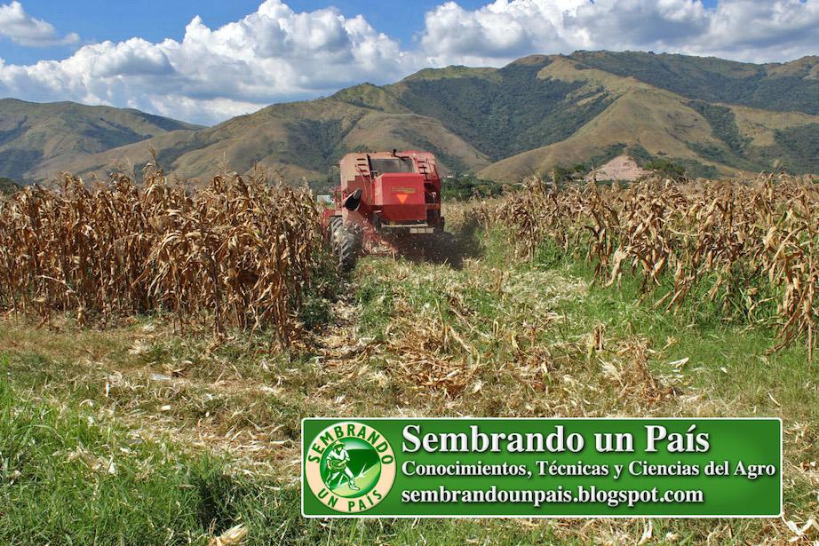 maquina cosechadora en campo de maíz