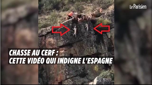 Βίντεο που σοκάρει – Κυνηγός έστειλε σκυλιά να κυνηγήσουν ελάφι και πέφτουν στον γκρεμό