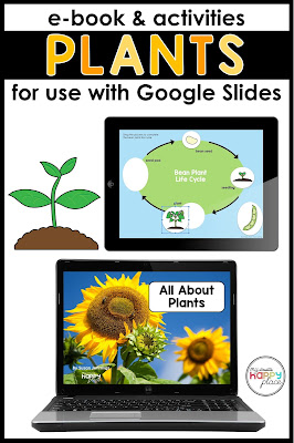 Distance learning activities for kindergarten and first grade - plants life cycle