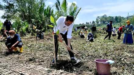 Presiden Jokowi Tanam Mangrove bersama masyarakat di Cilacap
