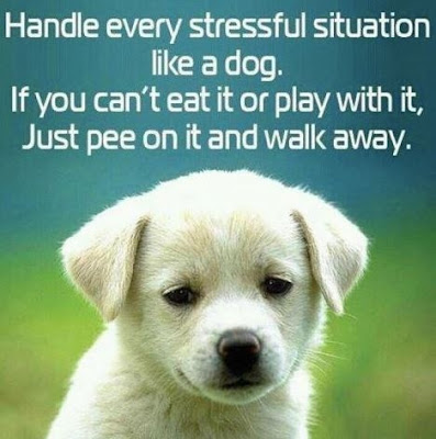 funny dog handle every stressful situation like a dog.