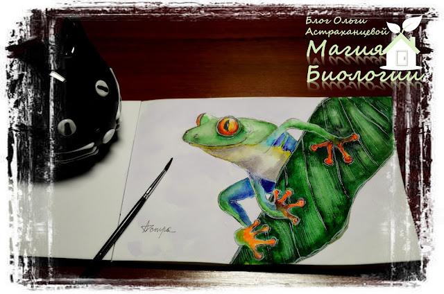 биологический рисунок-магия-акварель-филломедуза