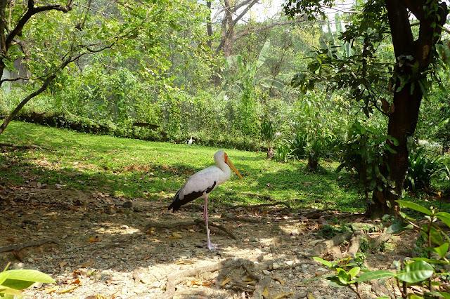 Park Ptaków w Kuala Lumpur