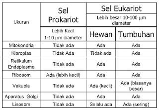 tabel perbedaan prokariotik dan eukariotik,perbedaan prokariotik dan eukariotik pdf,perbedaan prokariotik dan eukariotik beserta contohnya,perbedaan prokariotik dan eukariotik dalam tabel,