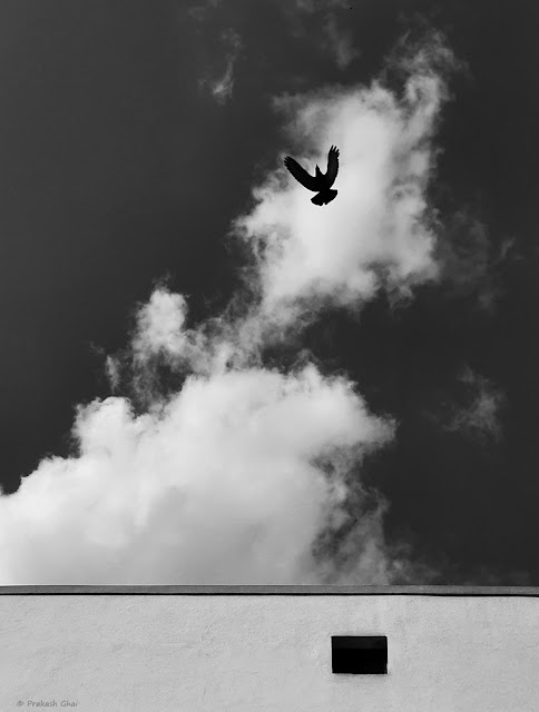 A Black and White Looking-Up Minimalist Photograph of a Flying Bird Vs Simple Geometric Shapes and the Clouds.