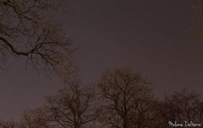 ciel étoilé avec arbres