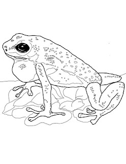 Strawberry Poison Dart Frog Coloring Pages