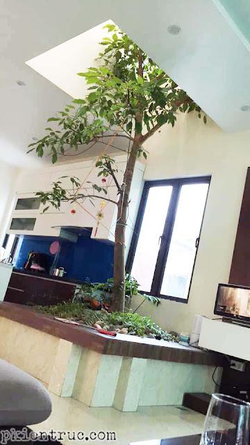 cây thân gỗ trong nhà