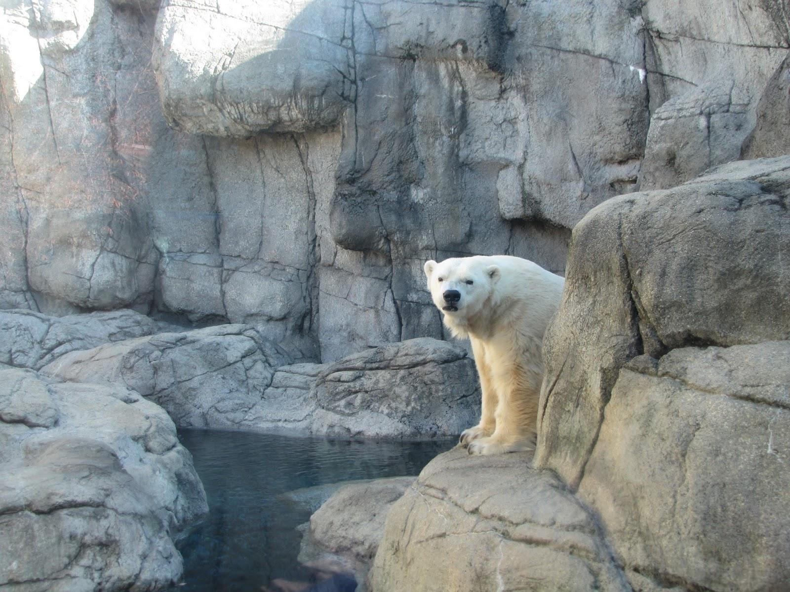 My Polar Bear Friends And Friends Of Polar Bears: Tundra