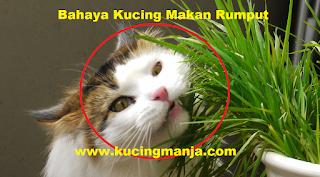 Inilah Beberapa Faktor Utama Yang Menyebabkan Kucing Sering Muntah