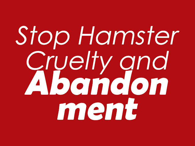 Stop Hamster Cruelty and Abandonment: Here's how you can help