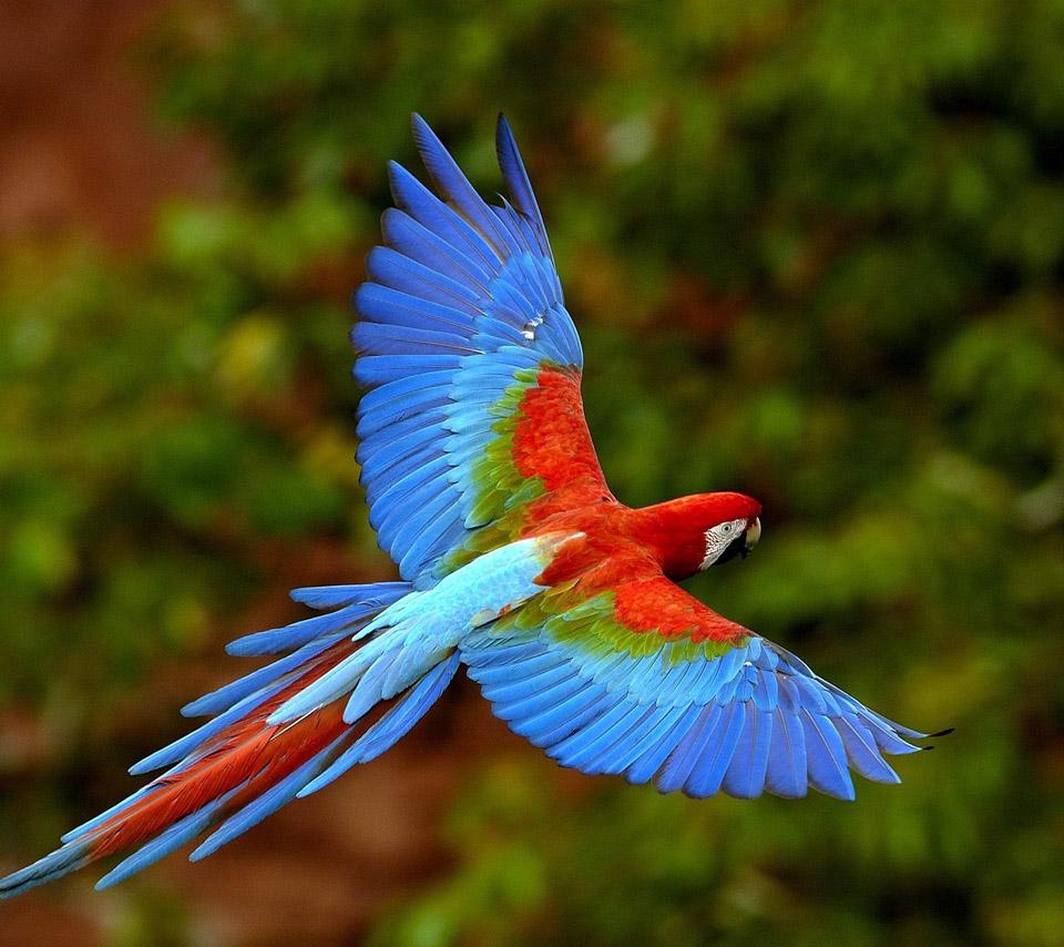 Birds: Flowers For Flower Lovers.: Beautiful Flowers Parrots Birds