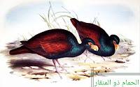 حيوانات مهددة بالإنقراض ، الحمام ذو المنقار