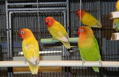Kisaran Harga Aksesoris Sangkar Lovebird Terbaru Dan Terlengkap Saat Ini