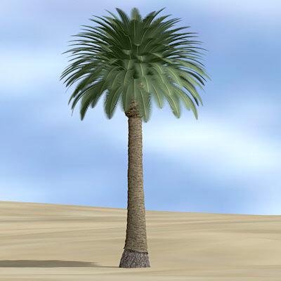 Pohon Kurma Untuk Masa Depan