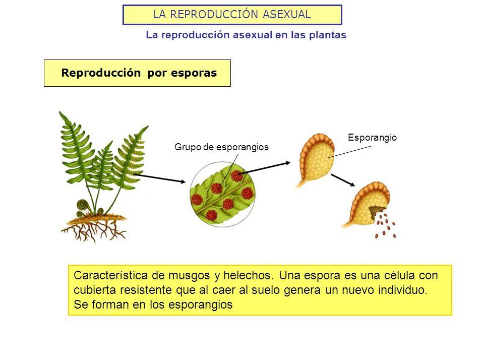 Videos de reproduccion asexual de plantas
