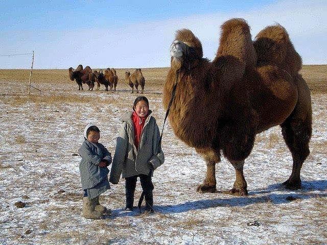 Muslim Mongolia dan Minimnya Masjid