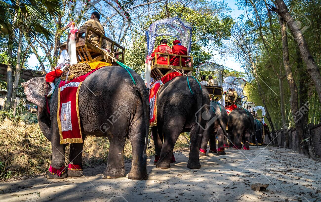 A group wedding on the back of elephants in Thailand on the occasion of Valentine's Day