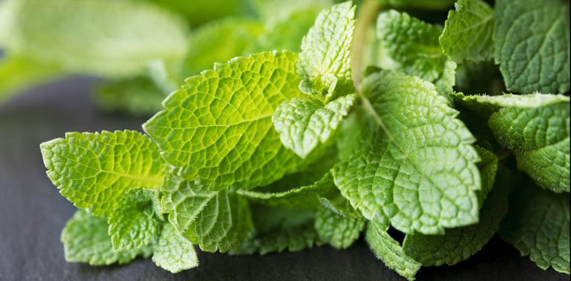 8 Mosquito Repellent Plants to Keep Pests Away From Your Garden