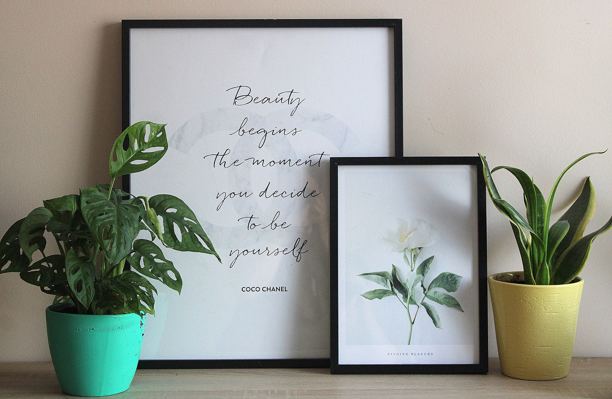 Poster Store plakaty rośliny