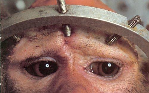 La máscara después del afeitado de la persona