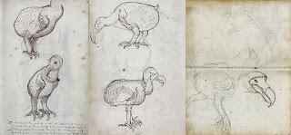 gambar asli burung dodo berasal dari belanda