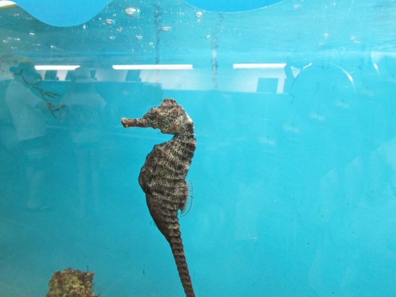 Visita ao Projeto Hippocampus Porto de Galinhas