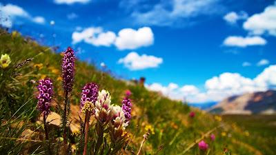 Free HD Wallpaper Summer, Flowers, Field, Grass
