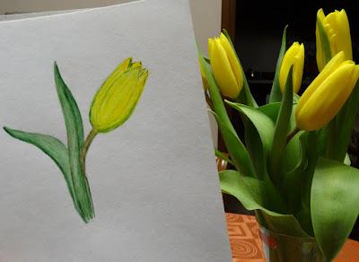 Тюльпаны купить птз