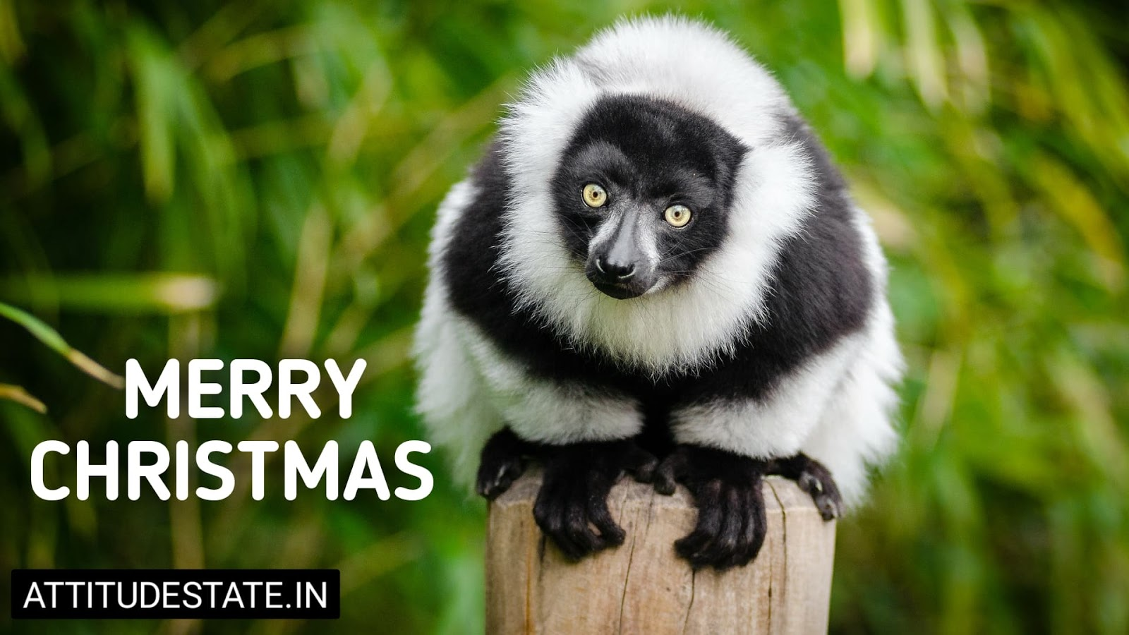 funny merry christmas gif images