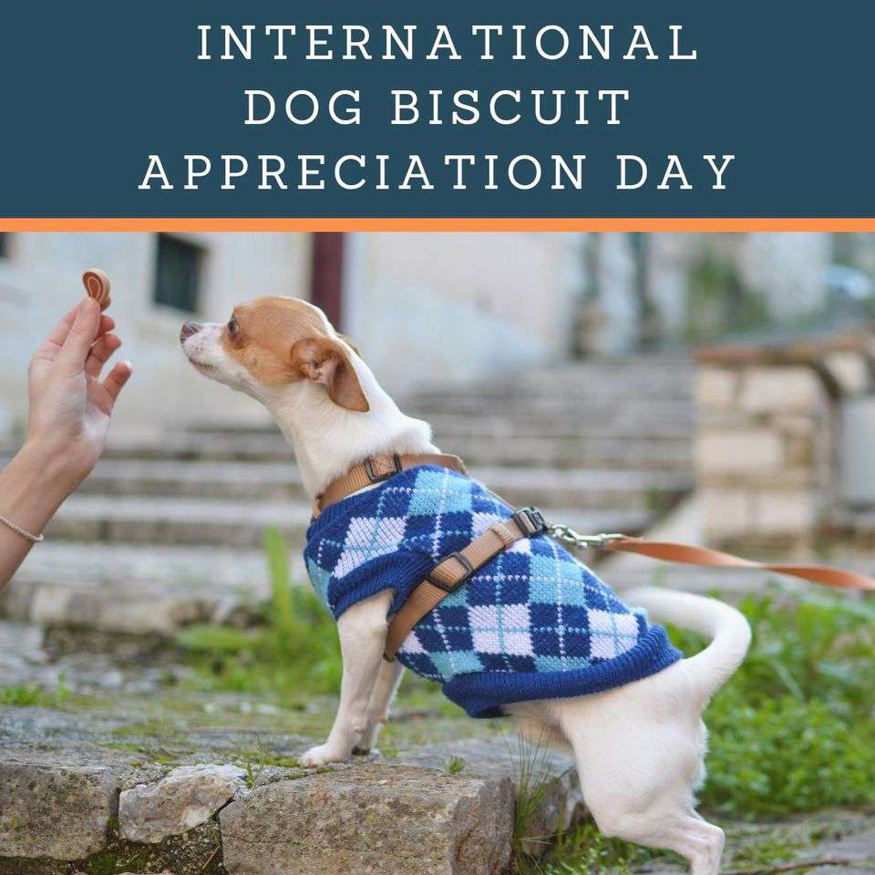 International Dog Biscuit Appreciation Day Wishes Sweet Images