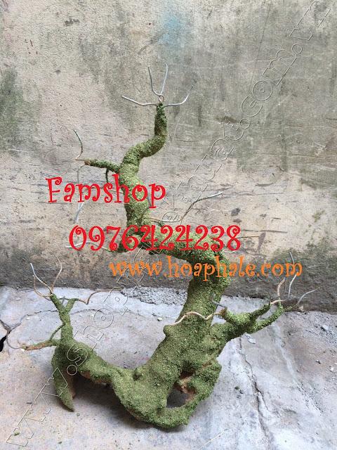 Goc bonsai mai dao tai Do Quang